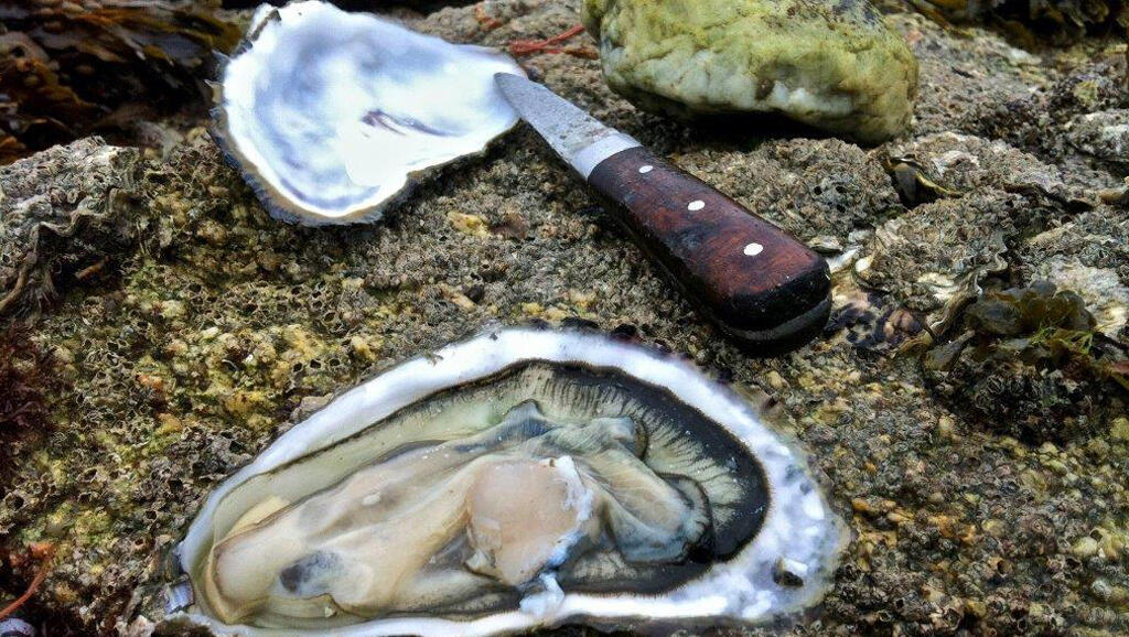 Thousands of  shellfish workers in Brittany have lost income after oysters on the west coast of France were contaminated with the norovirus.