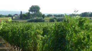 Vignoble na região de Luberon, na França.