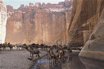 Un troupeau de dromadaires dans le massif Ennedi, au Tchad.