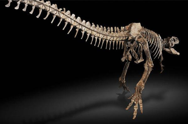 An allosaure skeleton that went on sale in 2010 in Sothebys in London