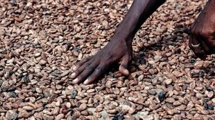 Le Ghana et la Côte d'Ivoire représentent plus de 60% de la production mondiale de cacao.