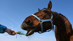 2020-03-26 horse feed