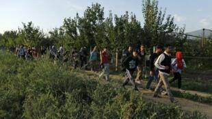 Nhóm tị nạn đầu tiên từ Serbia đi vào Croatia qua cửa khẩu Tovarnik - REUTERS /Antonio Bronic