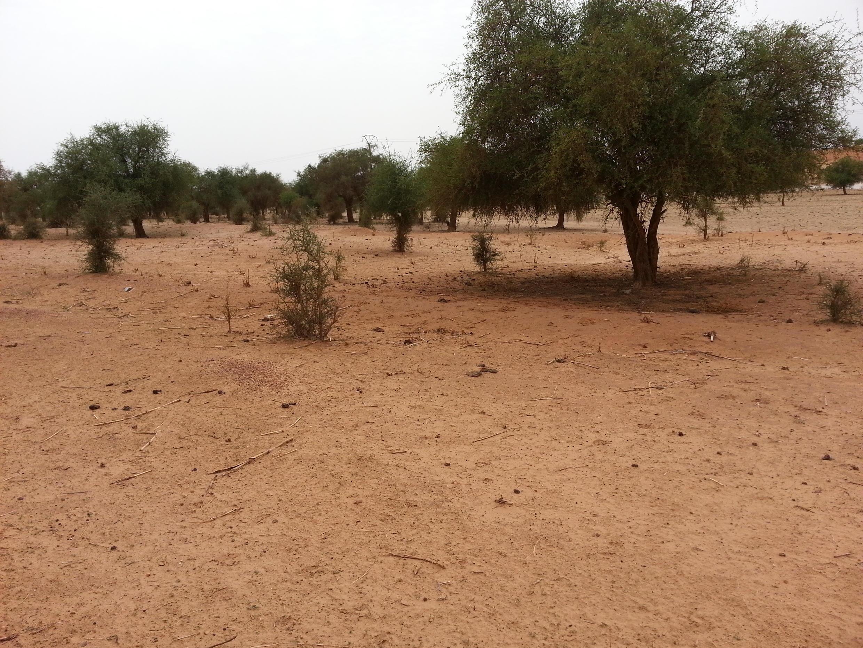 Des terres dégradées dans la région de Tillabéry au Niger.