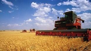 La production céréalière en Russie a augmenté d'un tiers au cours des sept dernières années pour atteindre 119 millions de tonnes en 2016.