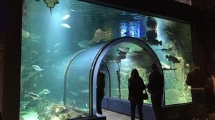 Océarium海洋博物馆