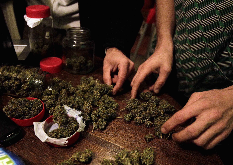 Un cultivador de marihuana en Montevideo, agosto de 2012.