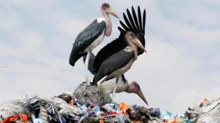 Au Kenya, le plastique était devenu un véritable fléau.