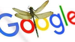 图为谷歌酝酿屈膝版搜索器蜻蜓前往中国市场合图