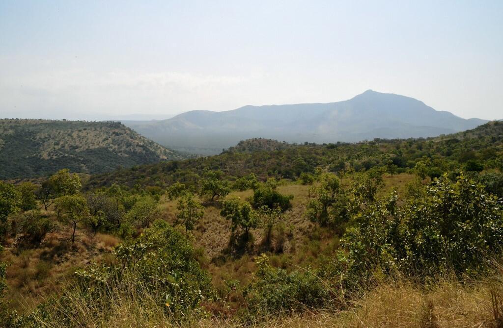 L'Éthiopie a perdu plus de 30% de sa couverture forestières au cours du XXe siècle (image d'illustration).