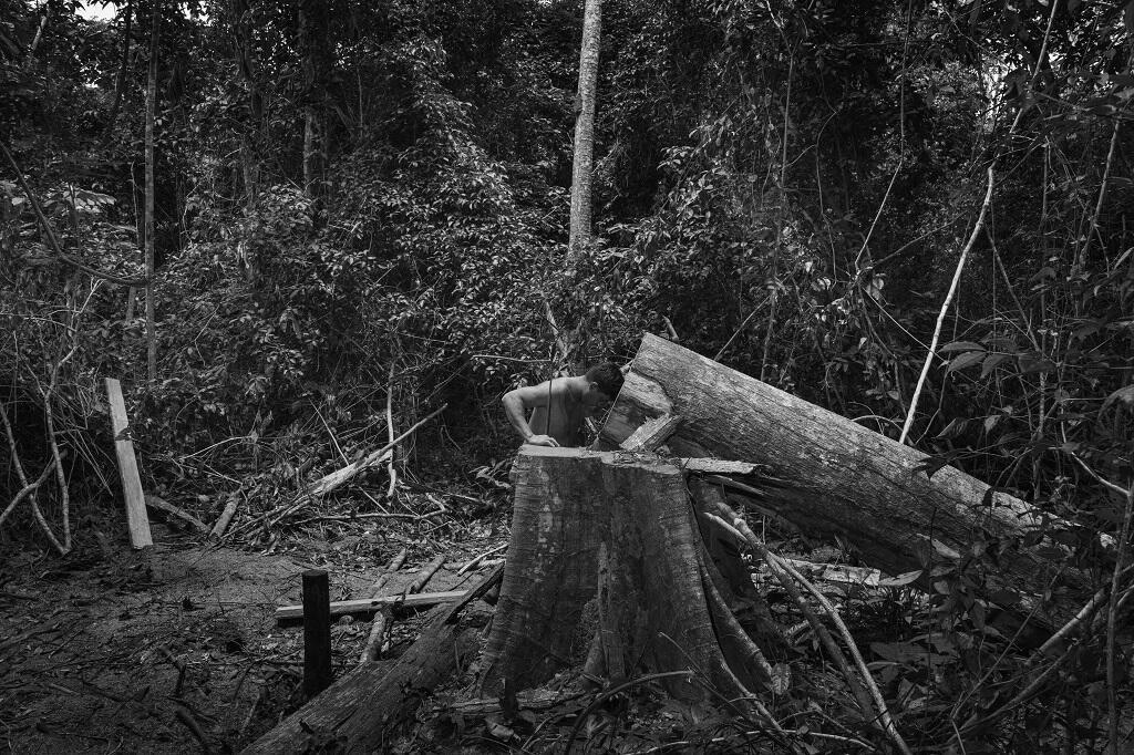 Araribóia, Brasil - Um membro da guarda florestal Guajajara em um momento de tristeza diante de uma árvore derrubada por suspeitos de exploração ilegal de madeira.