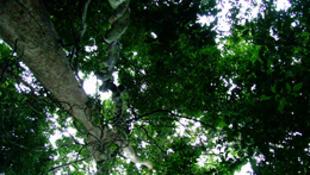 Cerca de 70% da biodiversidade mundial está localizada em países de terceiro mundo.