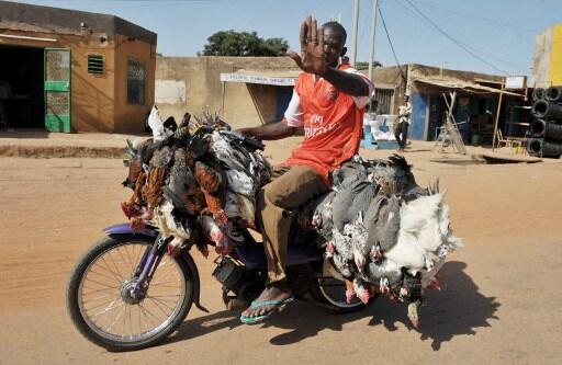Un livreur de poulets dans les rues de Ouagadougou.(Illustration).