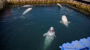 Впервые о «китовой тюрьме»  стало известно в октябре 2018 года
