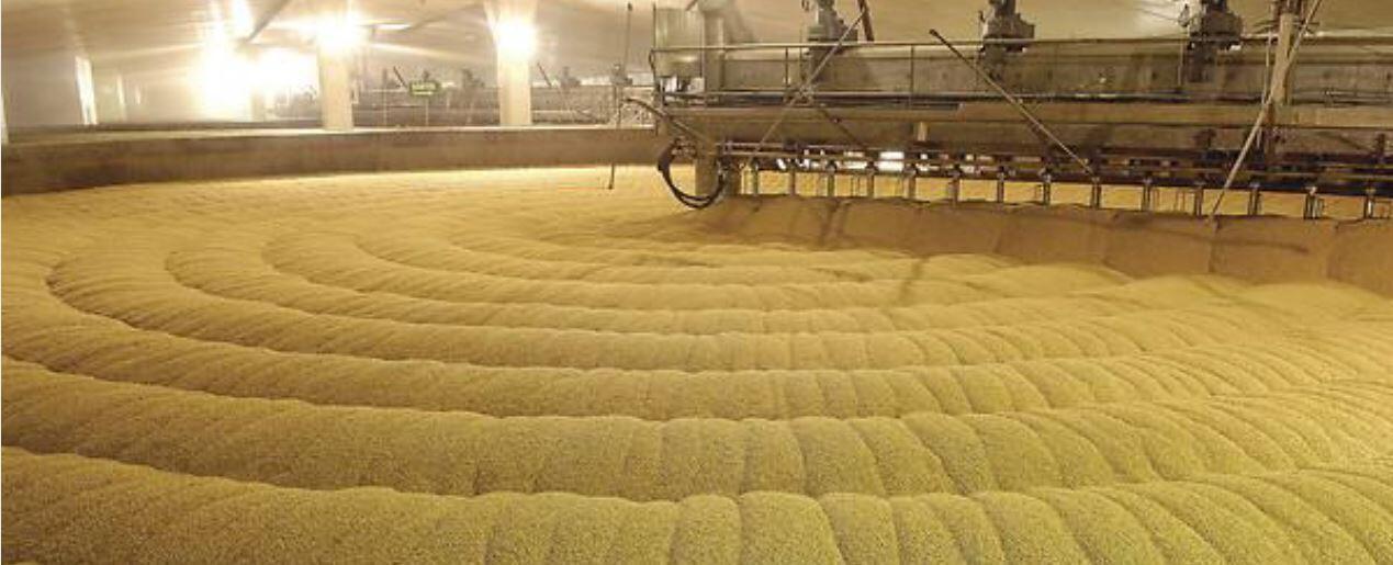 Зерновые культуры — одна из самых успешных отраслей французского сельского хозяйства