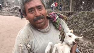 Un hombre lleva a su perro tras rescatarlo en El Rodeo de los peligros del volcán.