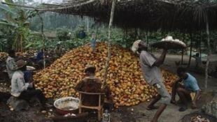 Des fermiers de Côte d'Ivoire.