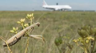 Vừa phát triển nông nghiệp, vừa bảo tồn thiên nhiên, đa dạng sinh học là thách thức hàng đầu của Liên Hiệp Châu Âu. Ảnh minh họa