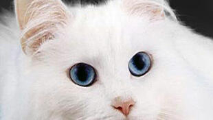 Nice Kitty ...