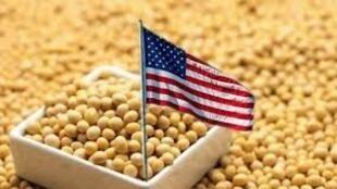 美國大豆報道圖片