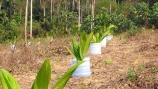 Produtores rurais de Nova Califórnia, no interior de Rondônia, decidiram inverter o processo de desmatamento.