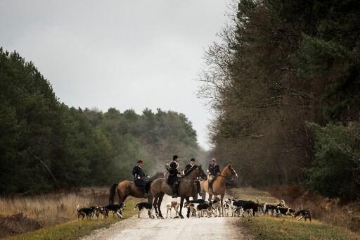 Caçadores com cães de caça na floresta de Chatenoy, centro da França.
