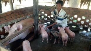 pig-maff-fb.2e16d0ba.fill-960x540