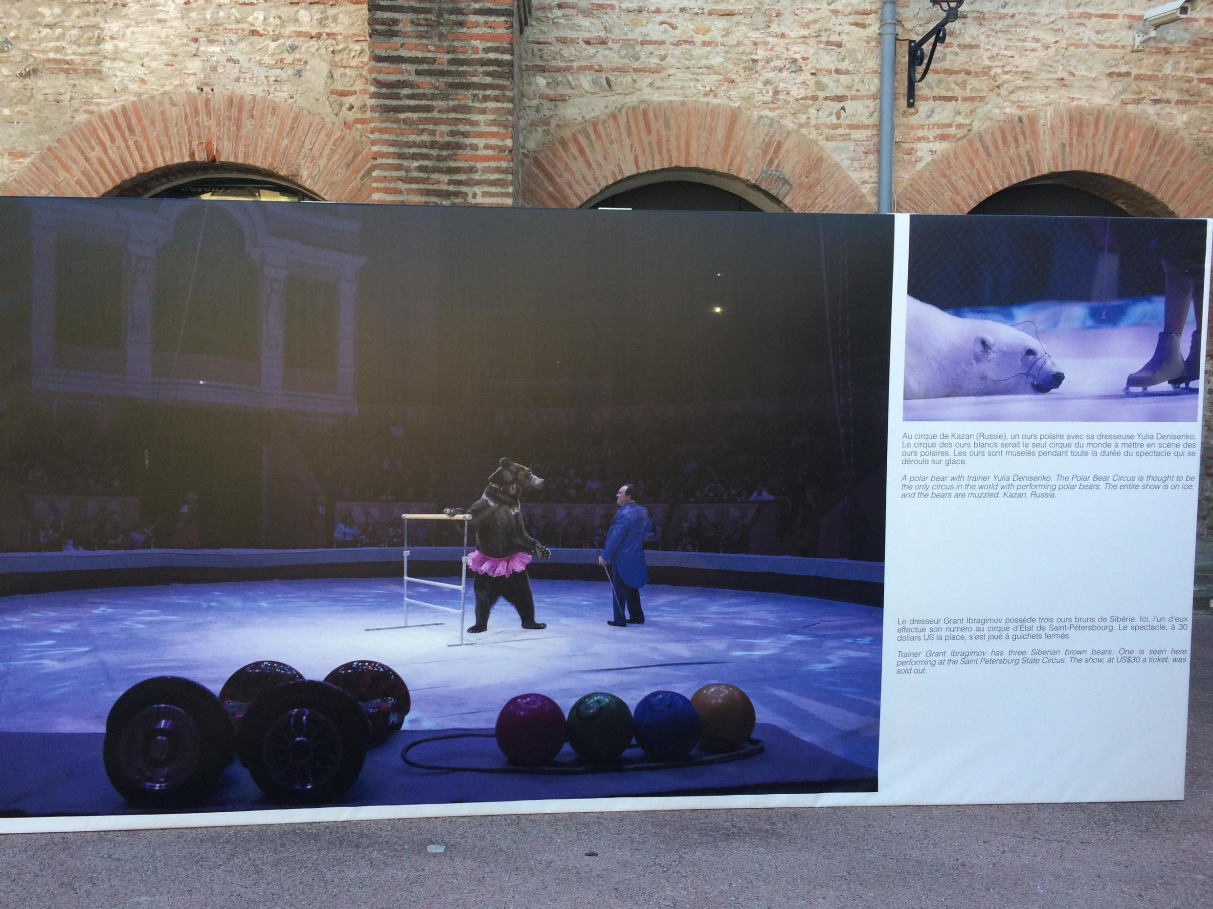 Image of bears performing for the ice circus in Russia from Kirsten Luce's exposition