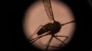 Yanayin sauro mai haddasa cutar Malaria