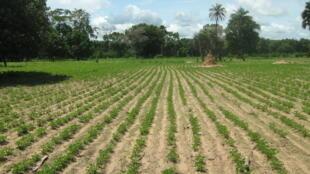 Seule une dizaine d'Etats africains alloue 10% de ses dépenses publiques à l'agriculture.