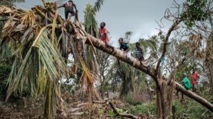 Crianças brincam num coqueiro partido pelos ventos do ciclone Idai na Beira, Moçambique, 27 de Março de 2019.