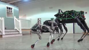 SpotMini de la firme Boston Dynamics mesure 84 cm et pèse environ 25 kg.