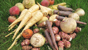 A agricultura orgânica é forte tendência na França.
