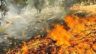 منشا آتش در منطقه حیران در نوار مرزی ایران و جمهوری آذربایجان، عامل انسانی و بادهای گرم اعلام شده است.