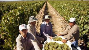 El vino argentino a perdido casi la mitad de su consumo en solo 10 años.