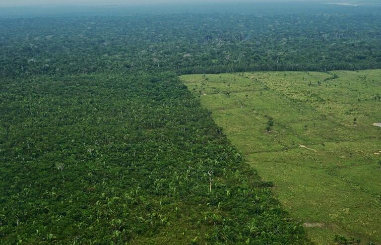 La forêt amazonienne est souvent prise en exemple lorsqu'il s'agit de dénoncer la déforestation.