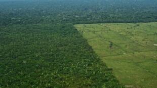 A floresta amazônica é considerada o pulmão do mundo.