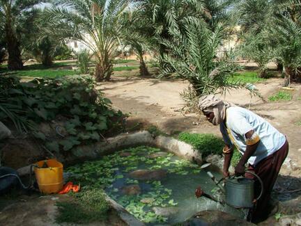 A Nouakchott, dans l'une des oasis, l'eau est un trésor.