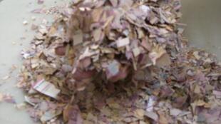 Dinheiro triturado é usado em mistura para adubo em pequenas propriedades rurais familiares.