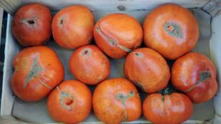 Органические помидоры на рынке в Тулузе