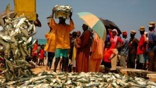 Le marché aux poissons à Kayar au Sénégal, avril 2010.