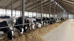 Une exploitation laitière dans le Wisconsin (États-Unis).