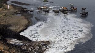 Les eaux polluées de la rivière Sabarmati en Inde.