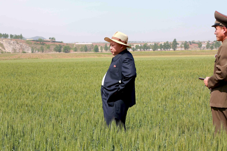 Lãnh đạo Bắc Triều Tiên Kim Jong-un đi tham quan ruộng lúa của một trang trại Nhà nước (Ảnh không ghi ngày)