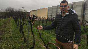 Pierre Chainier - PAC Cognac bio - vignes à cognac - Accents Europe