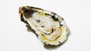 El IFREMER  ha implementado varios programas a nivel nacional para tratar de desarrollar ostras más resistentes.