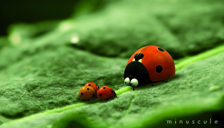 """""""Minúscule""""es una exitosa serie de animación 100% francesa, sobre el maravilloso mundo de los insectos."""