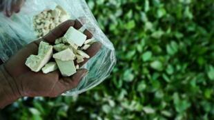 Un campesino muestra la pasta base de la cocaina que resulta del proceso de transformación de las hojas de coca, en el departamento de Guaviare, este 25 de septiembre de 2017.