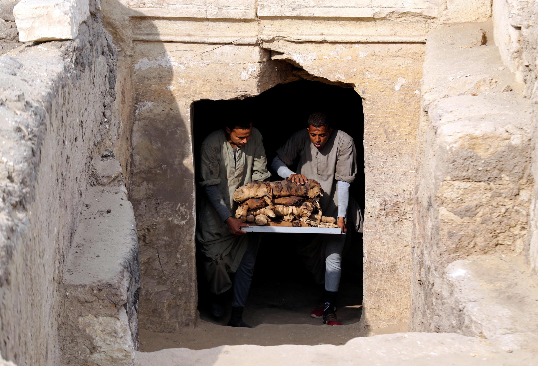 Equipes retiram gatos mumificados encontrados em tumbas no Egito