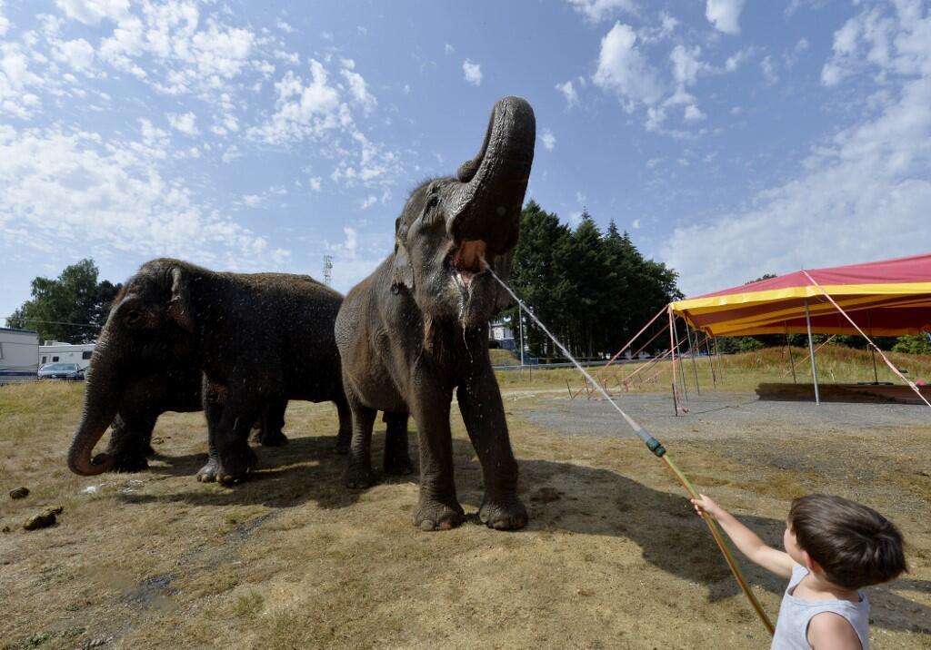 Enfant arrosant les éléphants du cirque Medrano. C'était à Limoges, le 3 juillet 2015 durant une canicule.